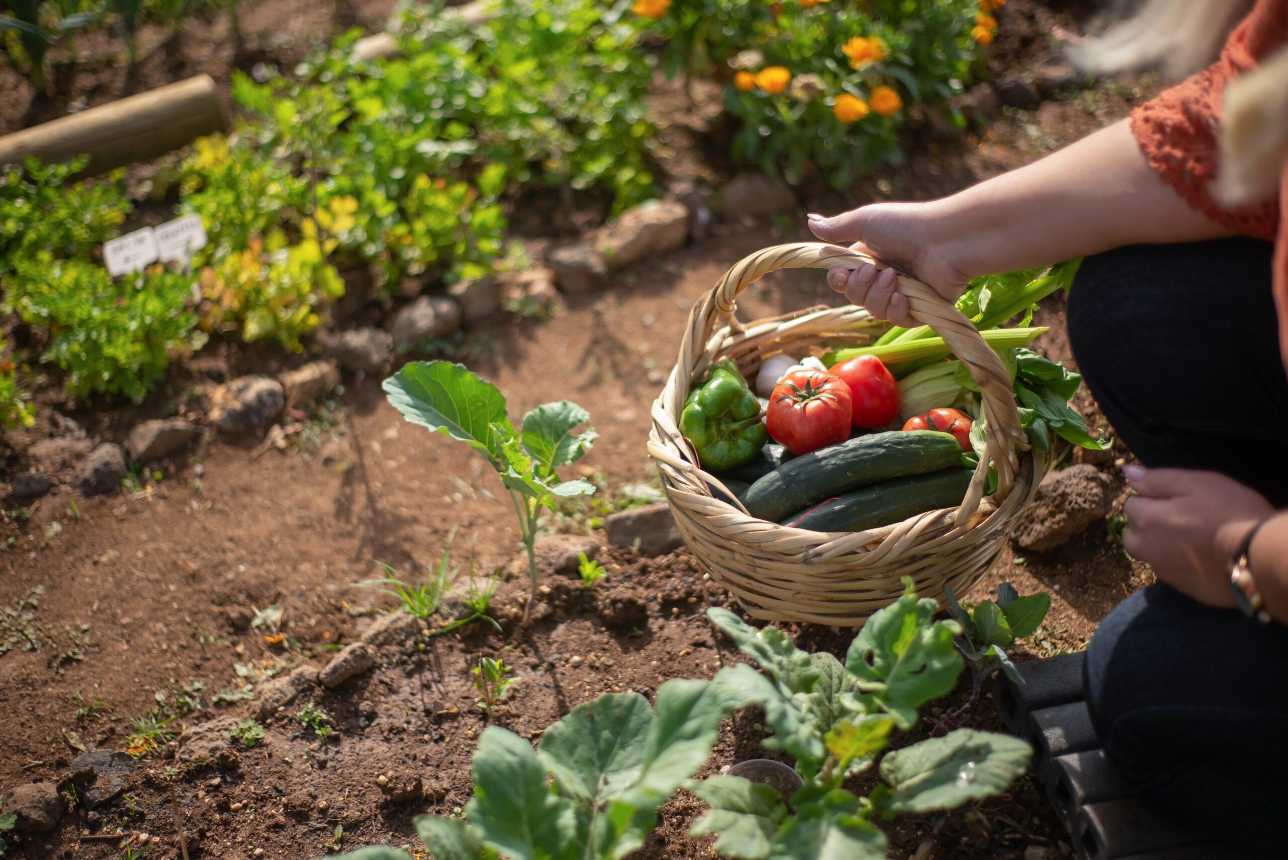 Gartengestaltung: Den Frühling richtig nutzen